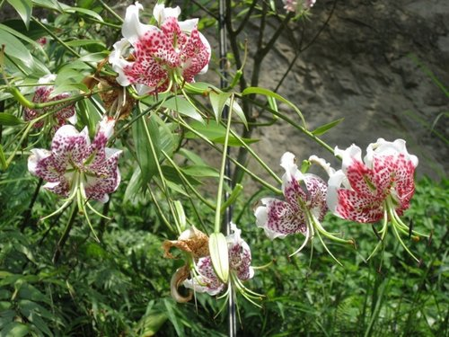 flower-j1.jpg