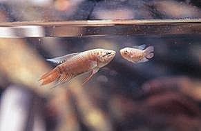 fish-16.jpg