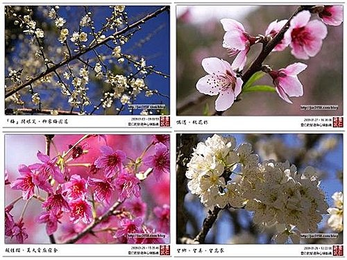 flower-f1.jpg