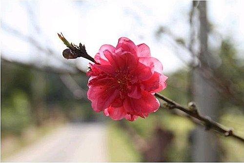 flower-f2.jpg