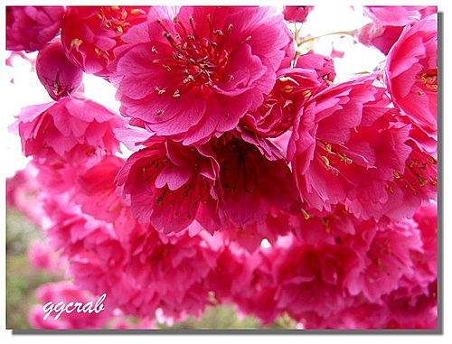 flower-e2.jpg