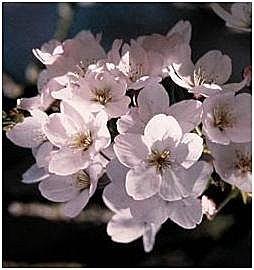 flower-e3.jpg