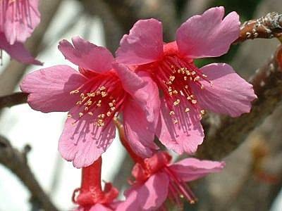 flower-e1.jpg
