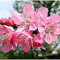 flower-e5.jpg
