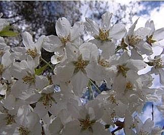 flower-e6.jpg