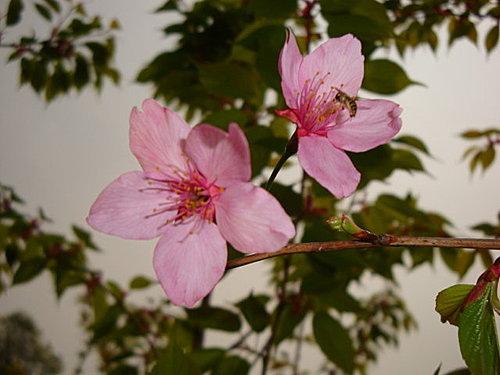 flower-e4.jpg