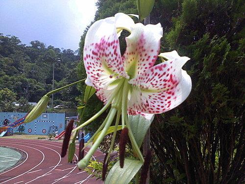 flower-j4