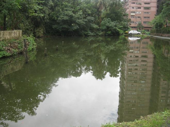 pond-3.jpg