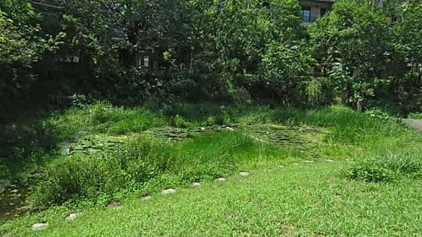 濕地-2.JPG