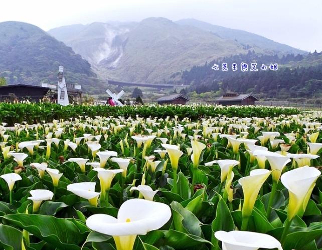 草山-2.jpg