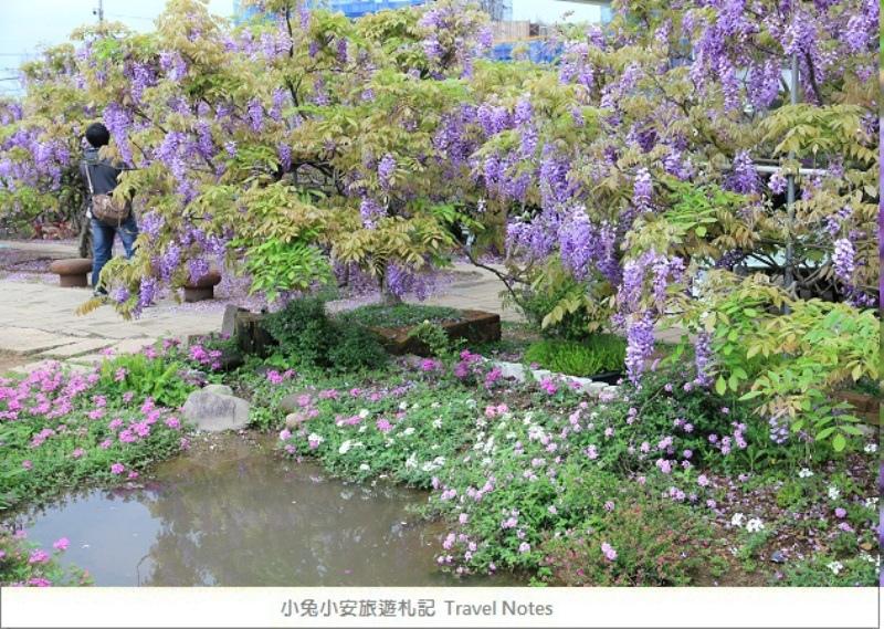 紫藤花-2.jpg