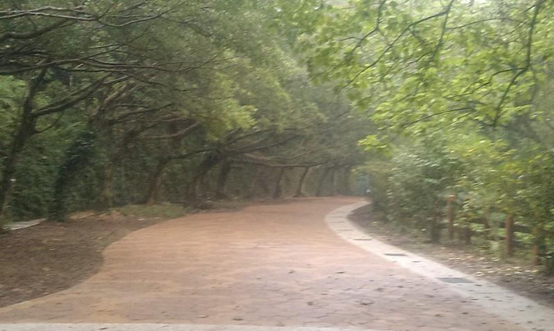 中埔山-5.jpg