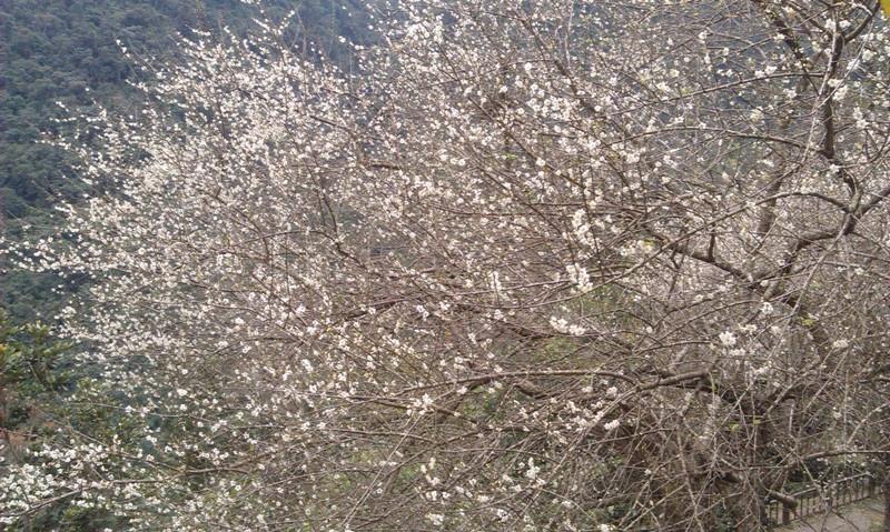 烏來高砂公園-4.jpg