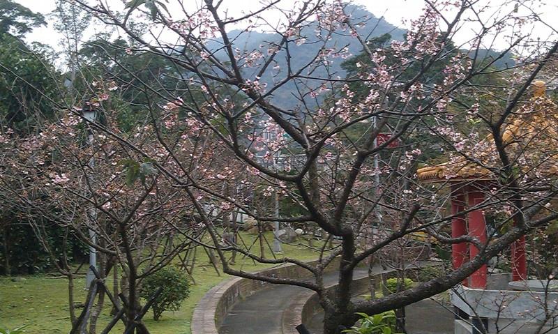 烏來櫻花公園-2.jpg