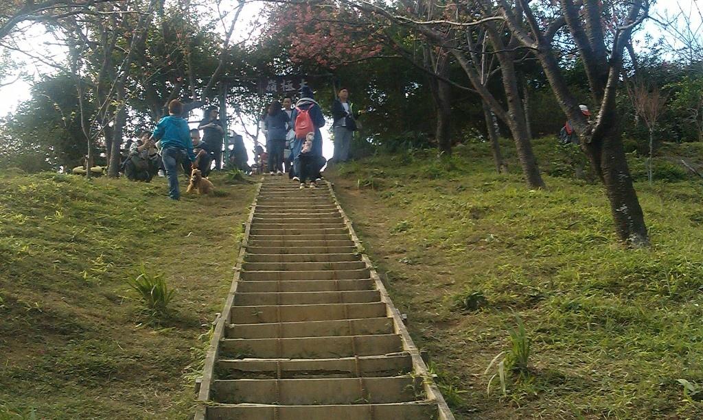 太極嶺櫻花-3.jpg