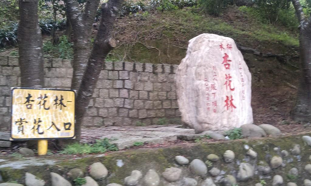 杏花林-1.jpg