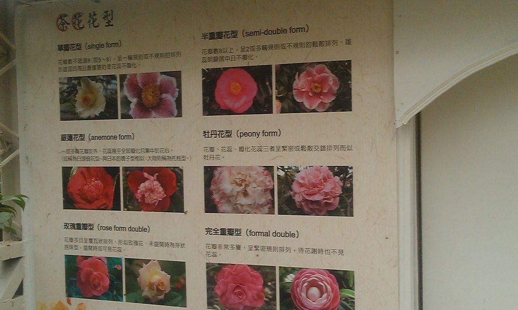 花卉中心-8.jpg
