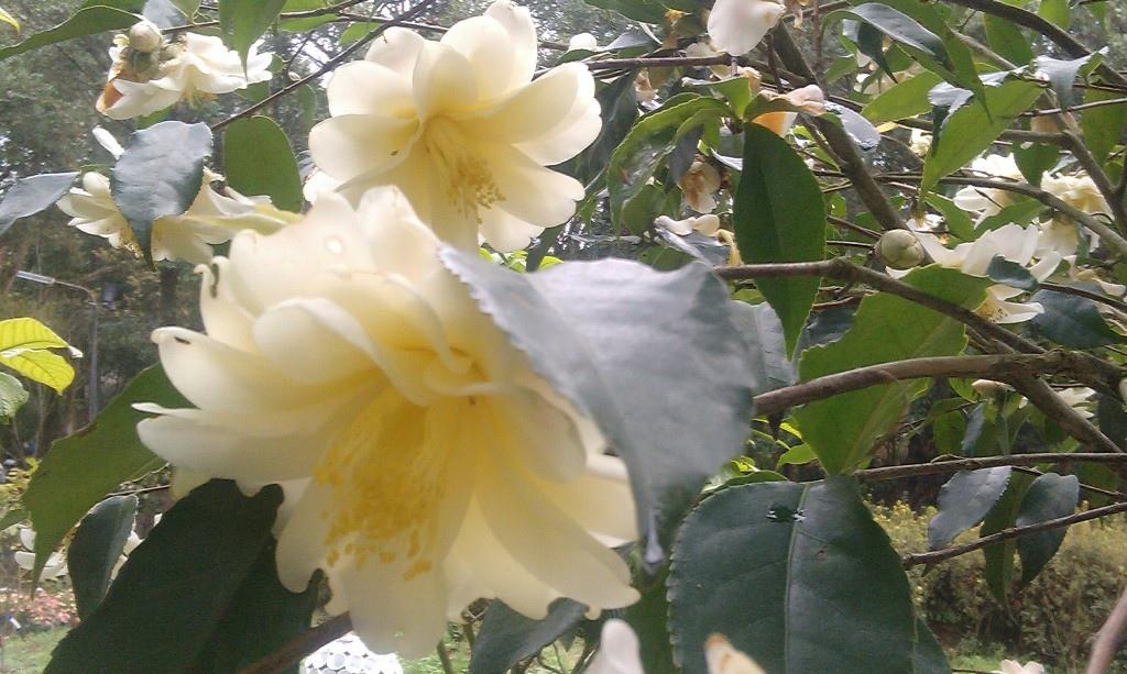 花卉中心-9.jpg
