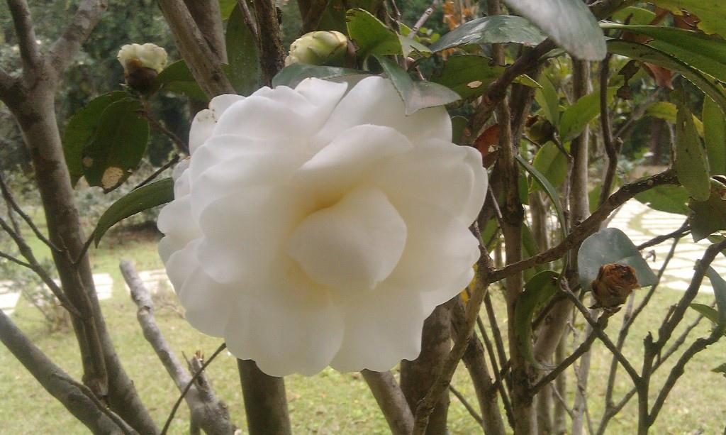 花卉中心-10.jpg