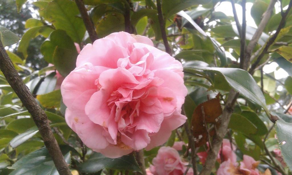 花卉中心-11.jpg