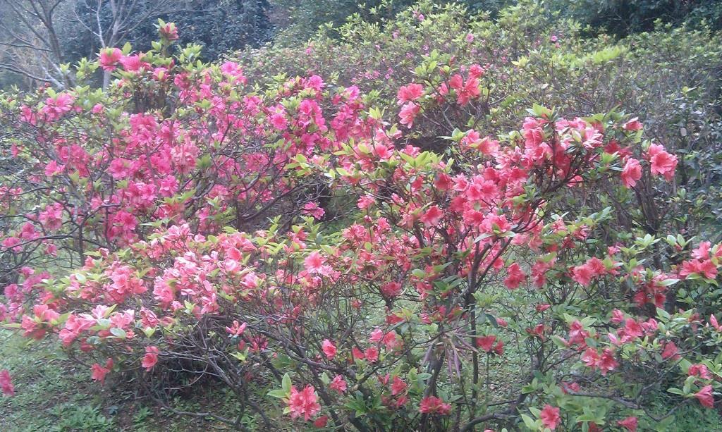 花卉中心-17.jpg