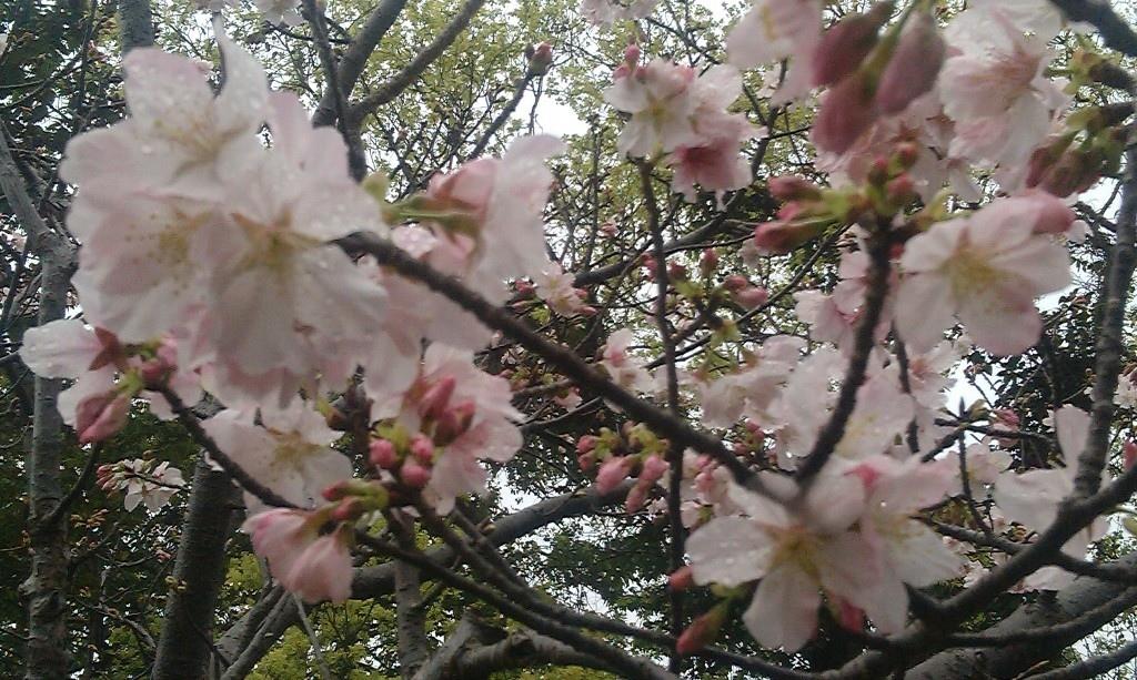 花卉中心-18.jpg