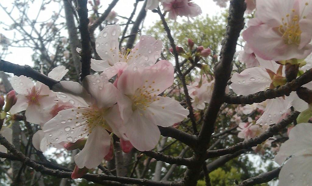 花卉中心-19.jpg