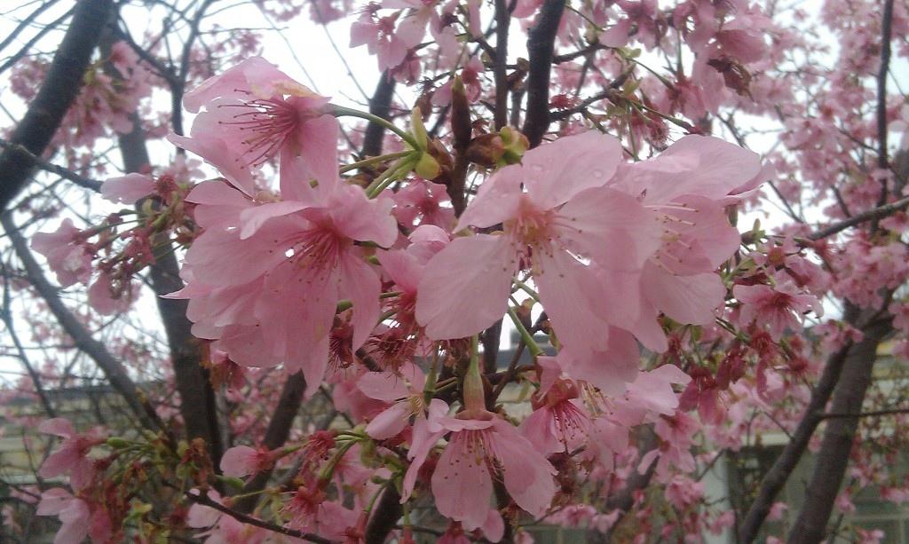 花卉中心-20.jpg