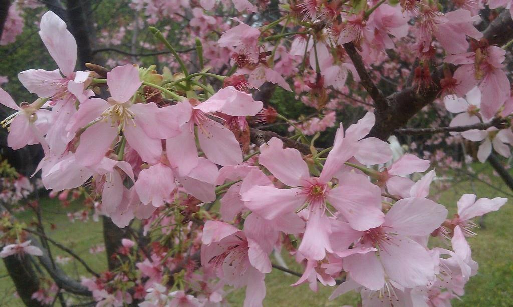 花卉中心-21.jpg