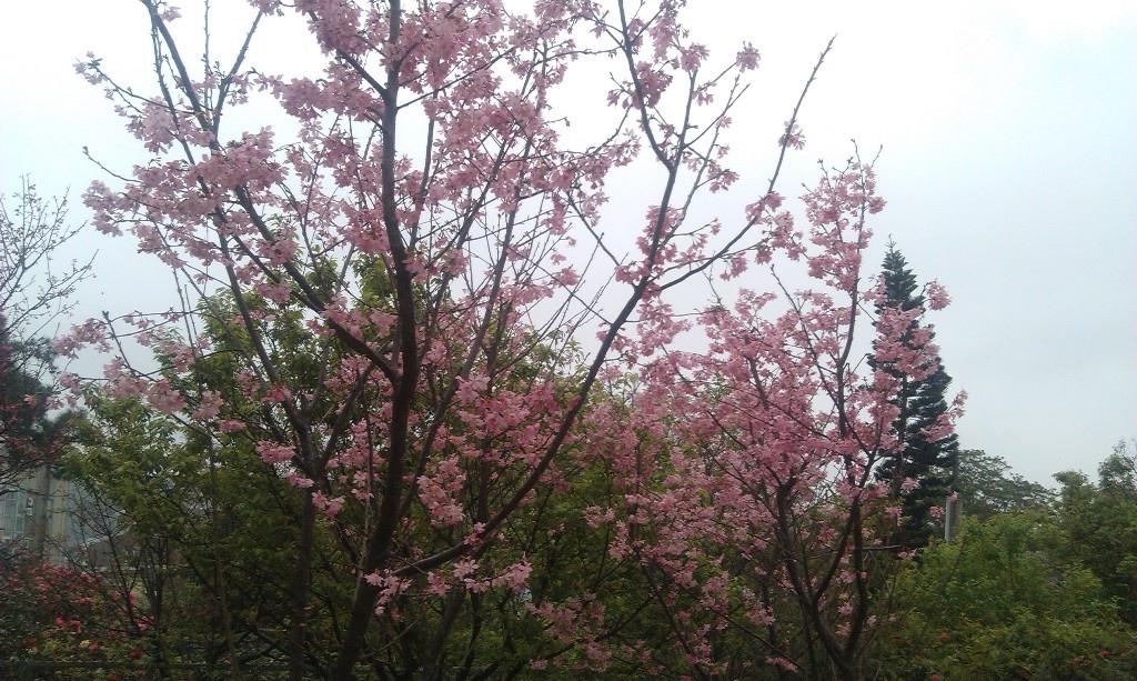 花卉中心-23.jpg