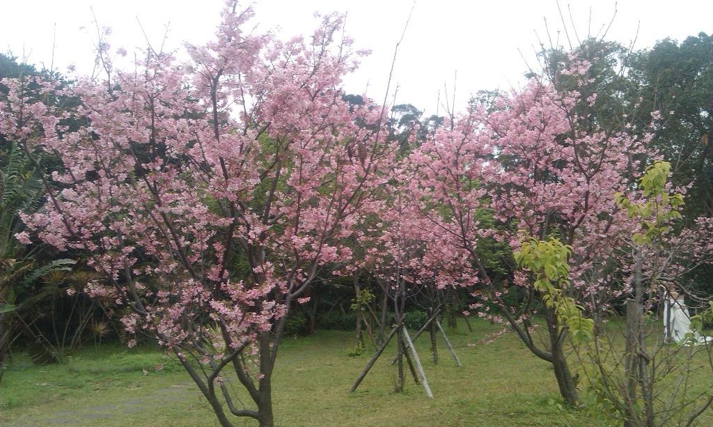花卉中心-24.jpg