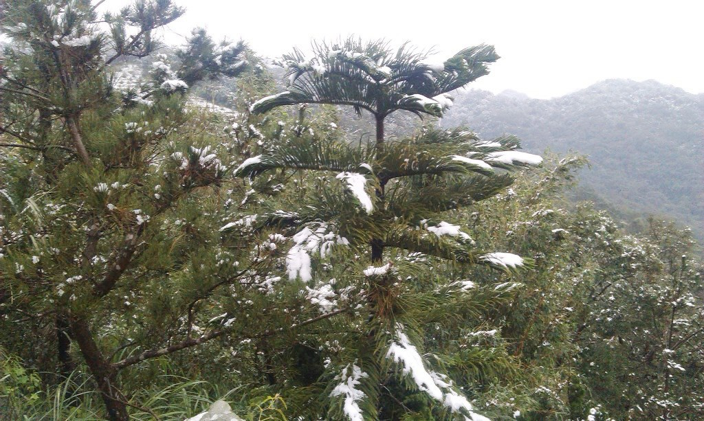 光明寺-雪4.jpg