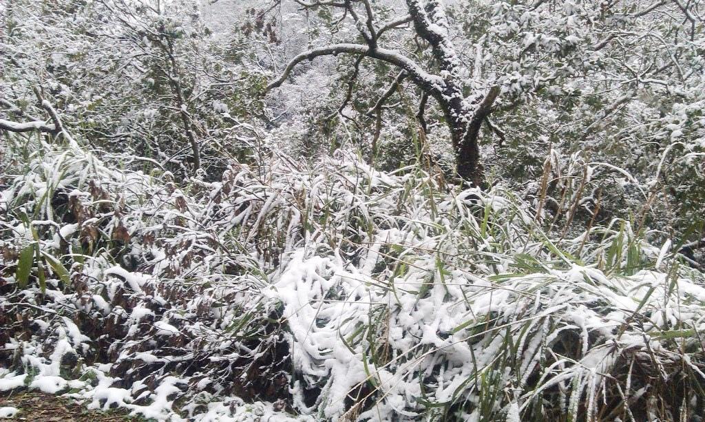 鵠鵠崙-雪3.jpg