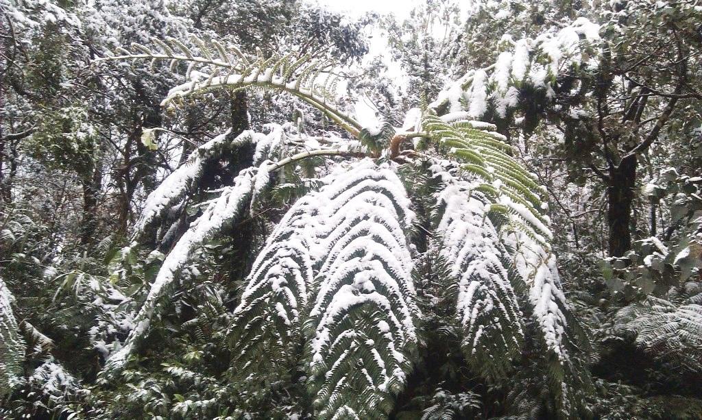 鵠鵠崙-雪4.jpg