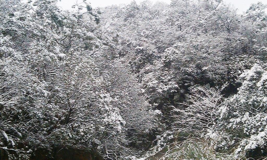 鵠鵠崙-雪7.jpg