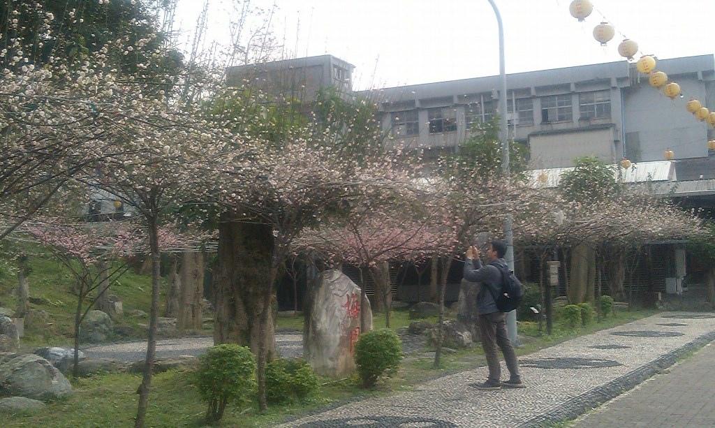 紅梅-大墓公2016j.jpg