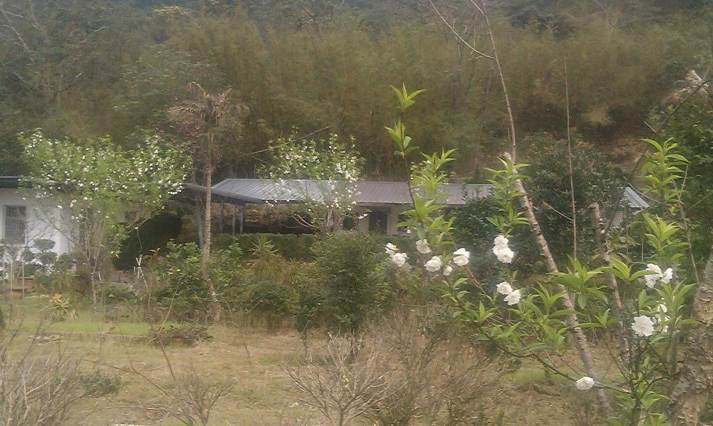 磨石坑杏花-2016e.jpg