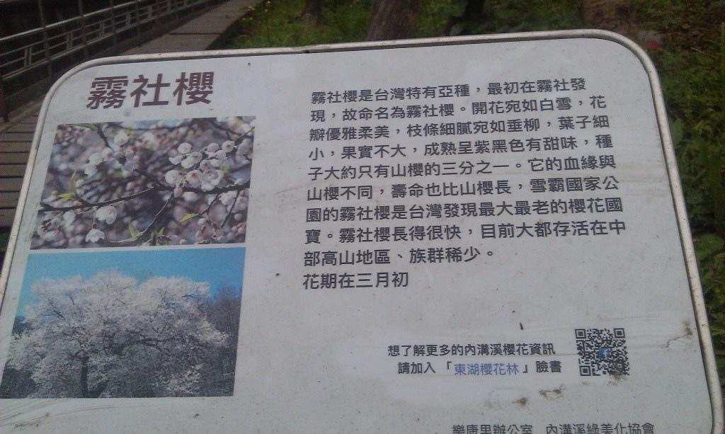 霧社櫻-4.jpg