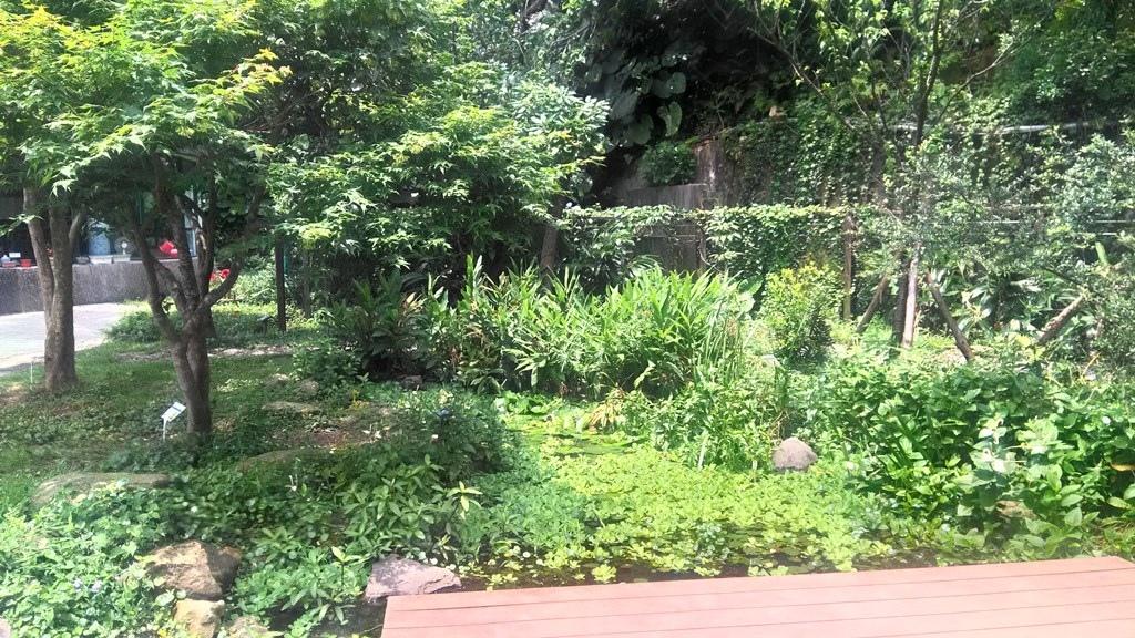 和平國小-小生態池.jpg