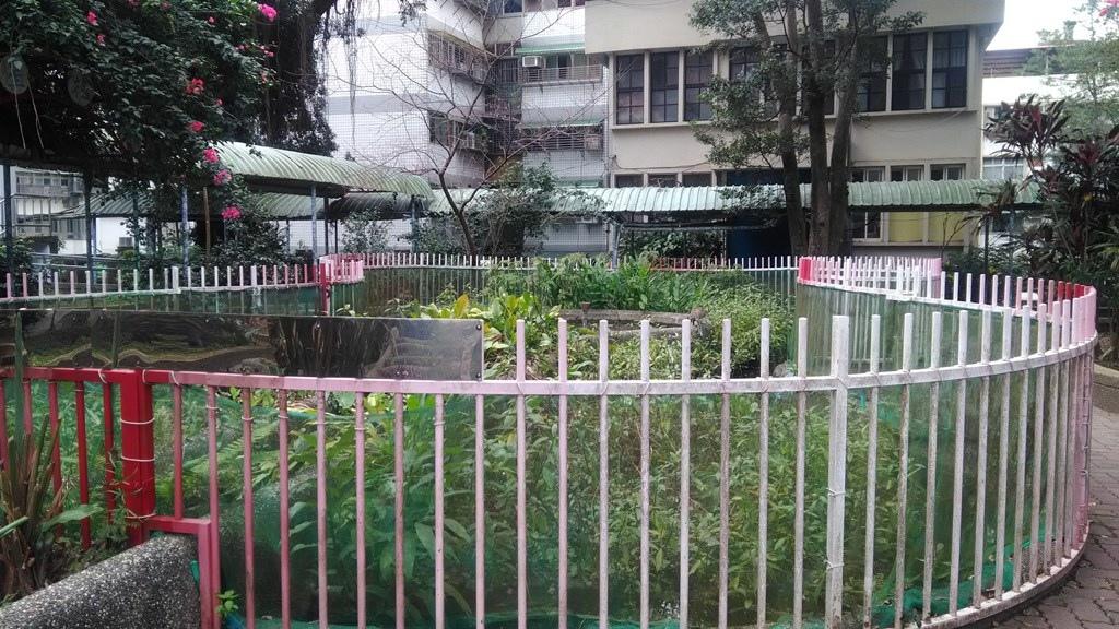新店國小-水生態園.jpg