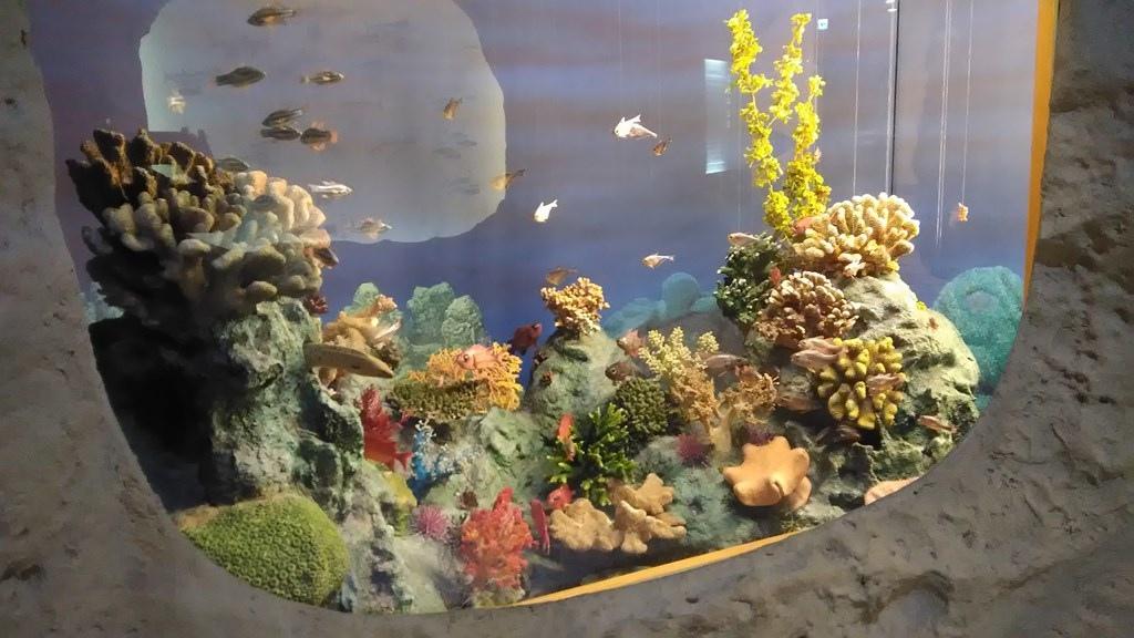 常展-臺灣的生物分佈3.jpg