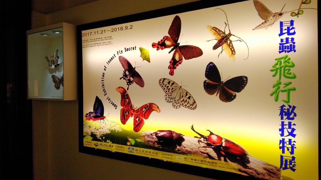 特展-昆蟲飛行1.jpg