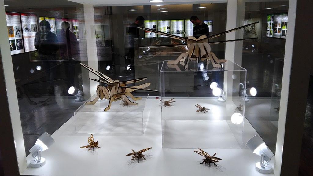 特展-昆蟲飛行2.jpg