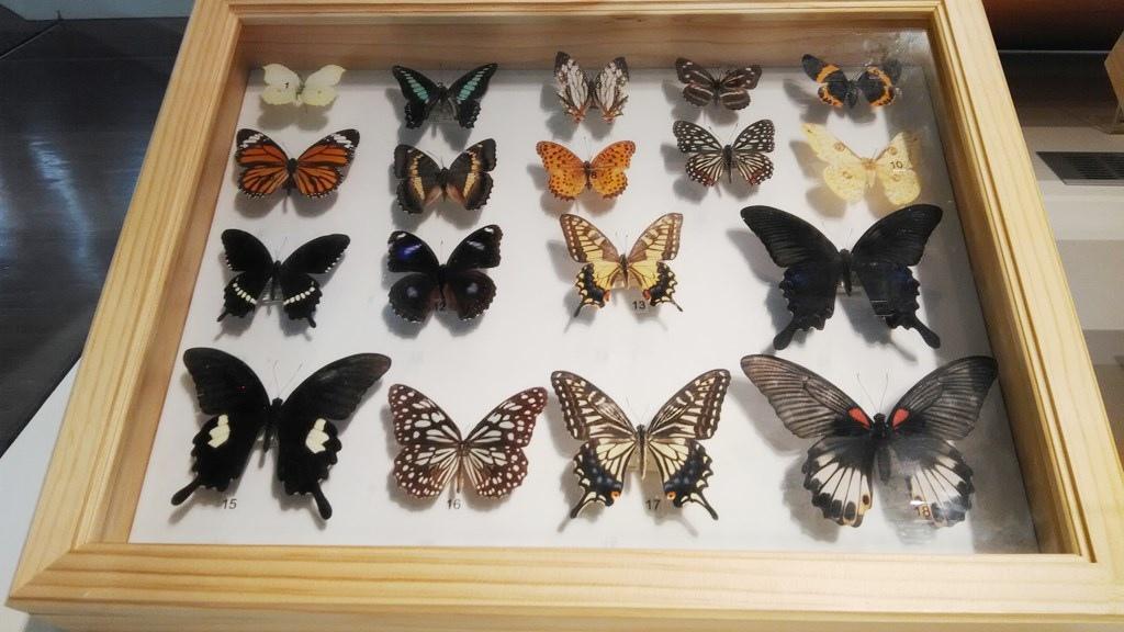 特展-昆蟲飛行3.jpg