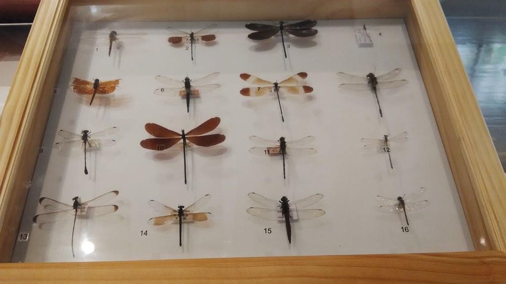 特展-昆蟲飛行5.jpg