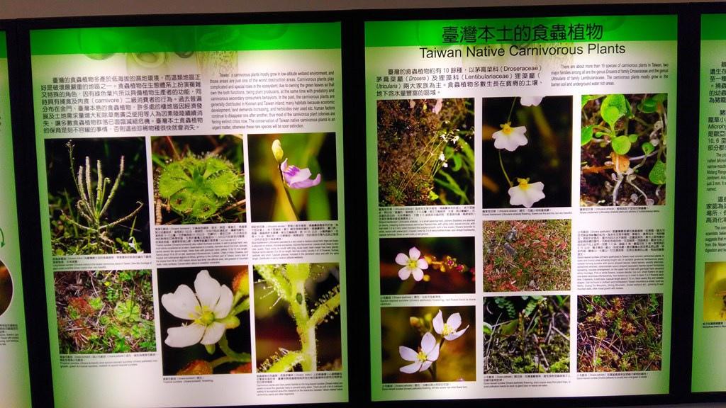 特展-食蟲植物1.jpg