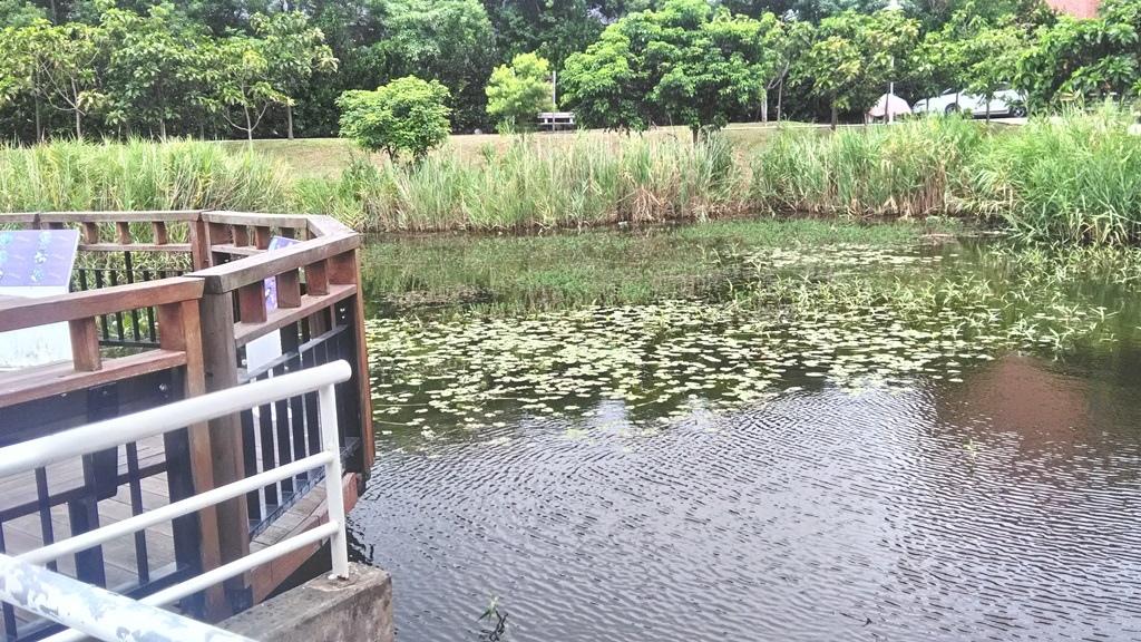 花博公園美術館區-水生植物池.jpg