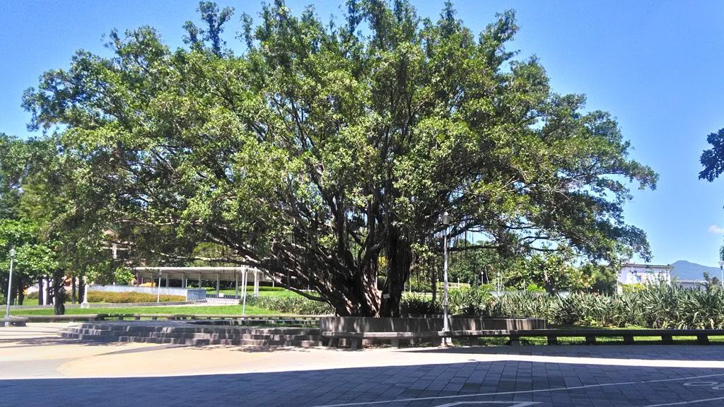 花博公園圓山區-巨木.jpg