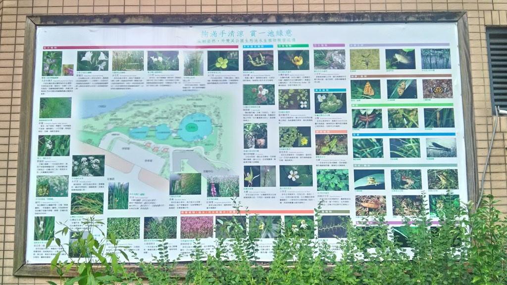 外雙溪公園-5.jpg