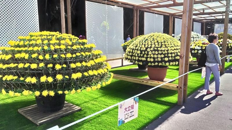 士林官邸菊展2018-5.jpg